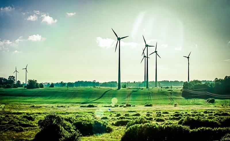 Ecosia : le google environnemental qui rendrait le monde plus vert